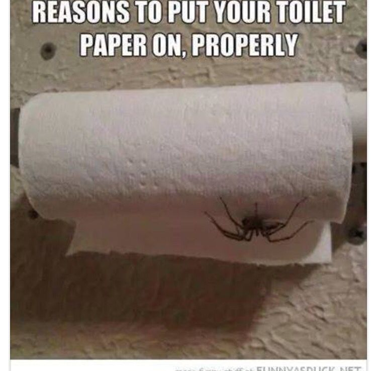 Image result for toilet paper spider image