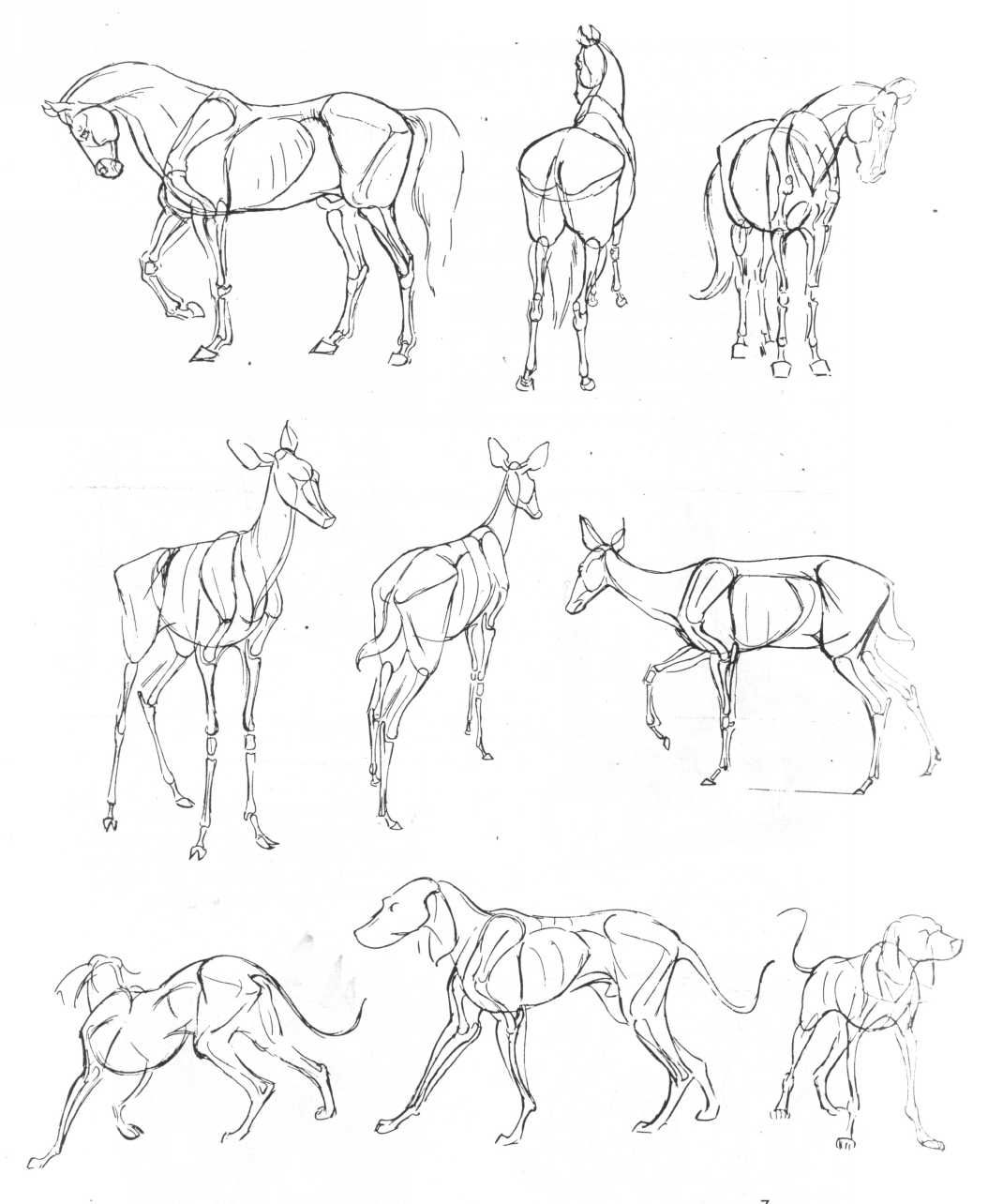 Line Drawings Of Baby Animals : The art of animal drawing by ken hultgren anatoref