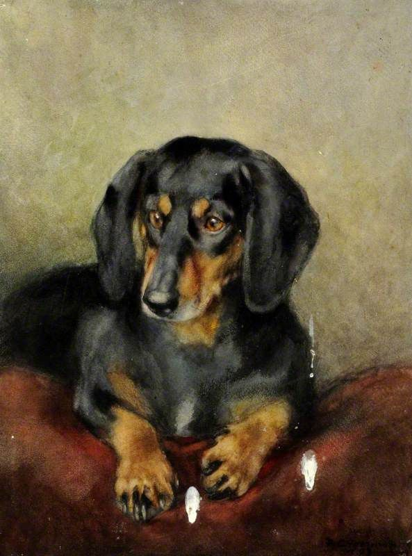 Black And Tan Dachshund Mix Google Search Dachshund Art