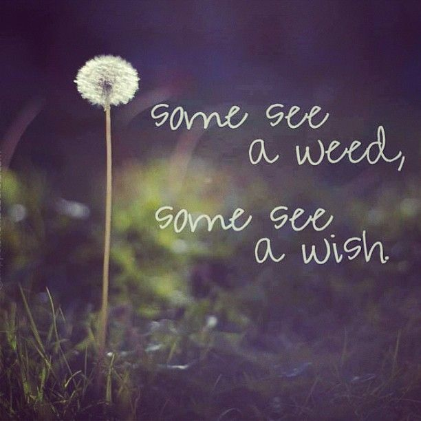 Some Educational Quotes: Some See A Weed, Some See A Wish . . . What Do You See?