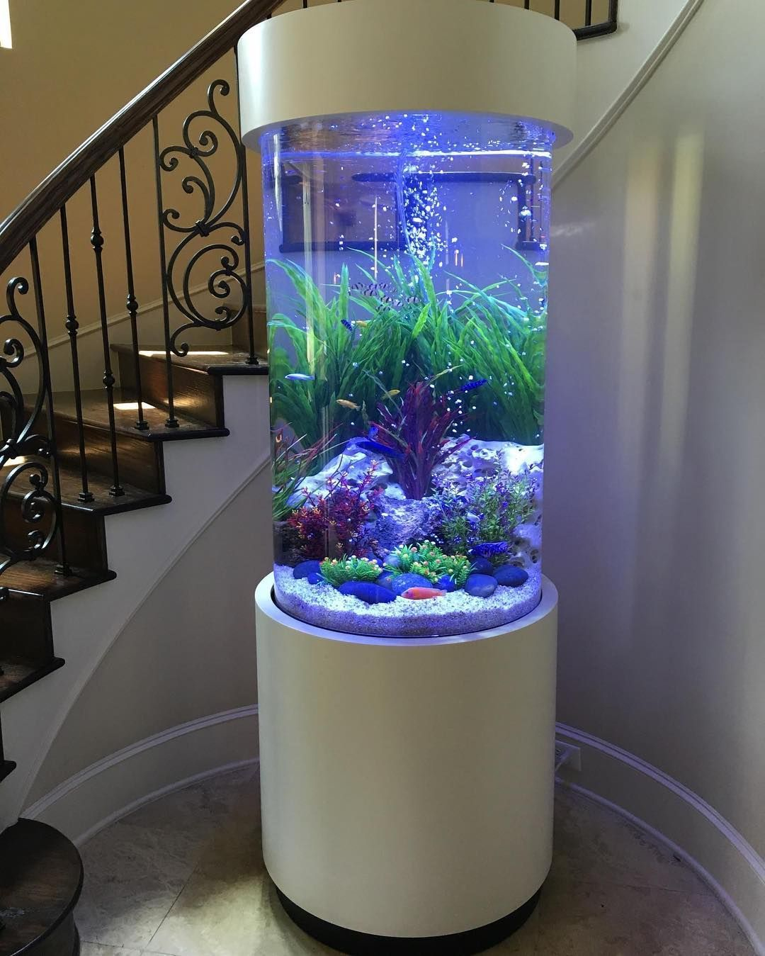 Home Aquarium Design Ideas: We Did Some Work On This Gorgeous Cylinder This Morning