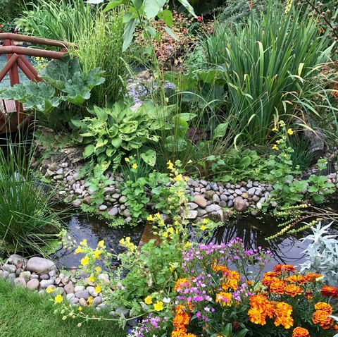 How to build a pond in your garden - from large ponds to ...