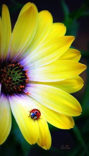 a garden friend   Yellow flowers, Beautiful flowers ...