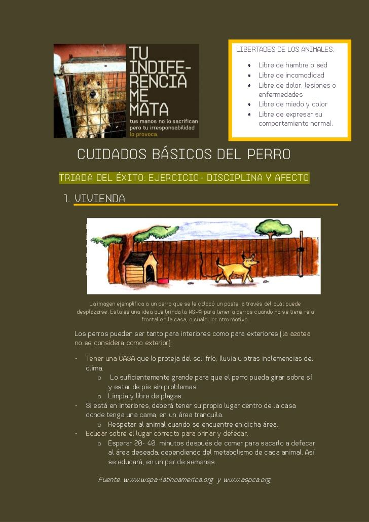 Cuidados básicos de tu animal de compañía perro 2 by www.tuindiferenciamemata.mx via slideshare