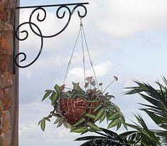 Mão-francesa Ornato - #design #jardim #garden #paisagismo #plantas #suporte #flores #decoração #aferroeflor