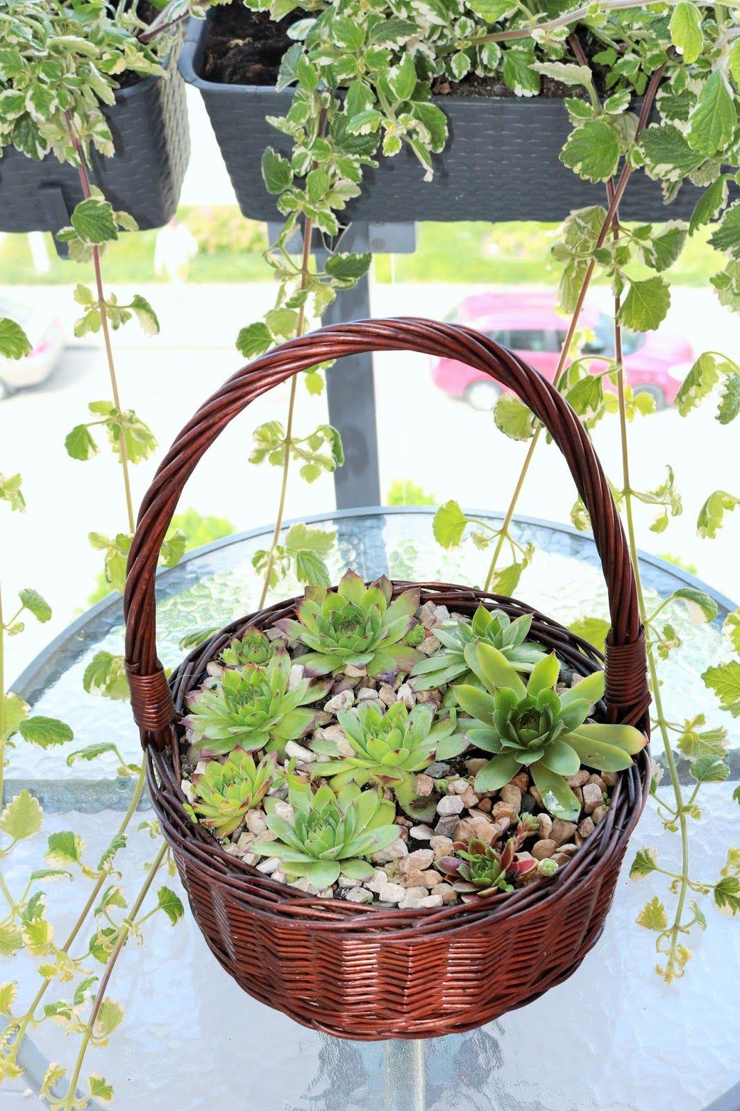 Moje Idealia Blog Lifestylowy Diy Wnetrza Ciaza I Macierzynstwo Uroda Kuchnia Skalniak W Doniczce Pomysl Na Dekoracje Slonecznego Balkonu Decorative Wicker Basket Wicker Baskets Decor