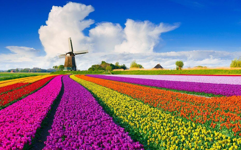 Fly to Europe to Enjoy Spring's Tulips Right Now for Only $354 ...
