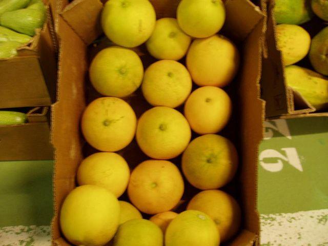 Melones Galia de Milán (Tejina)