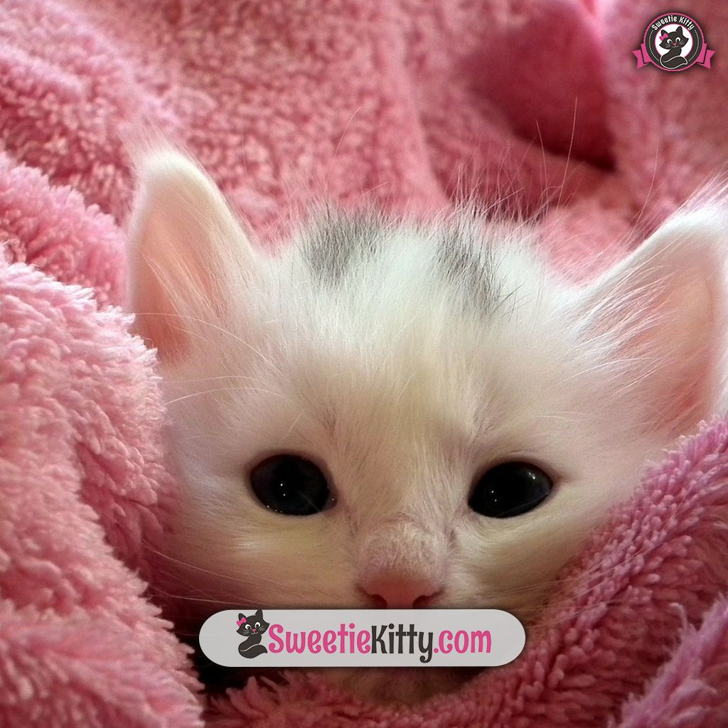 Free Ebook How To Take Care Of A Cat Sweetie Kitty 2020 Kittens Cutest Fluffy Cat Hug Your Cat Day