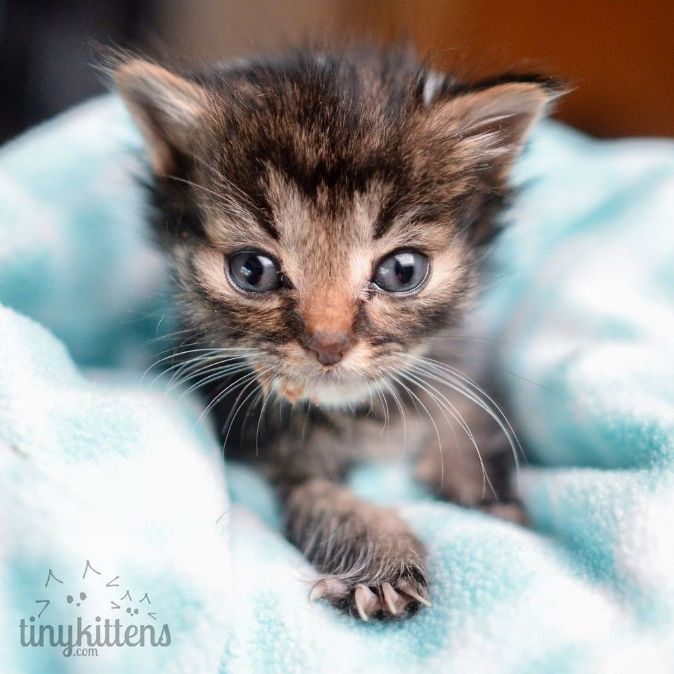 Tiniest 5 Week Old Kitten They Ever Rescued What A Difference 3 Days Can Make Poesje Katten Foto S