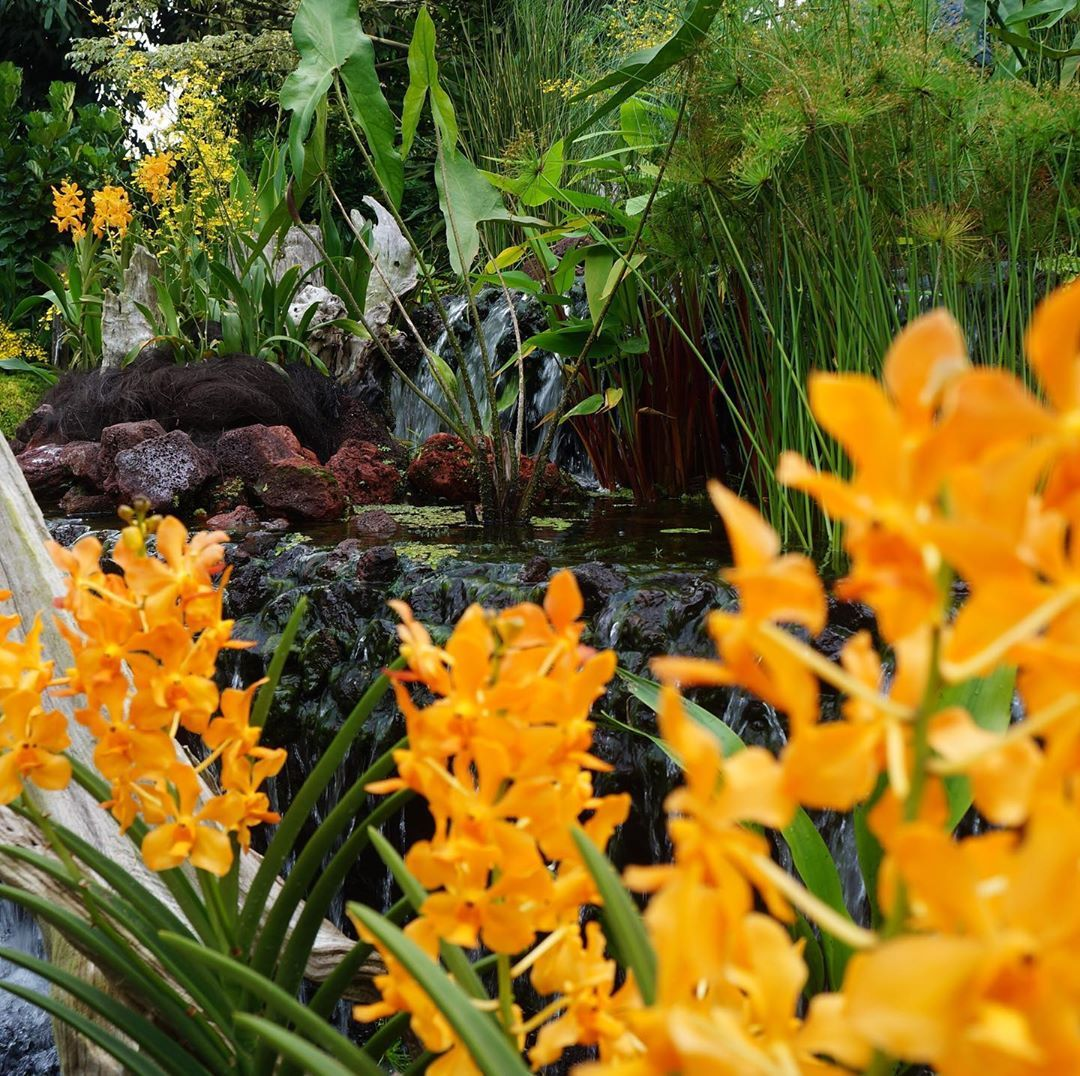 Singapore Botanical Gardens, Singapore (Jun 2018)