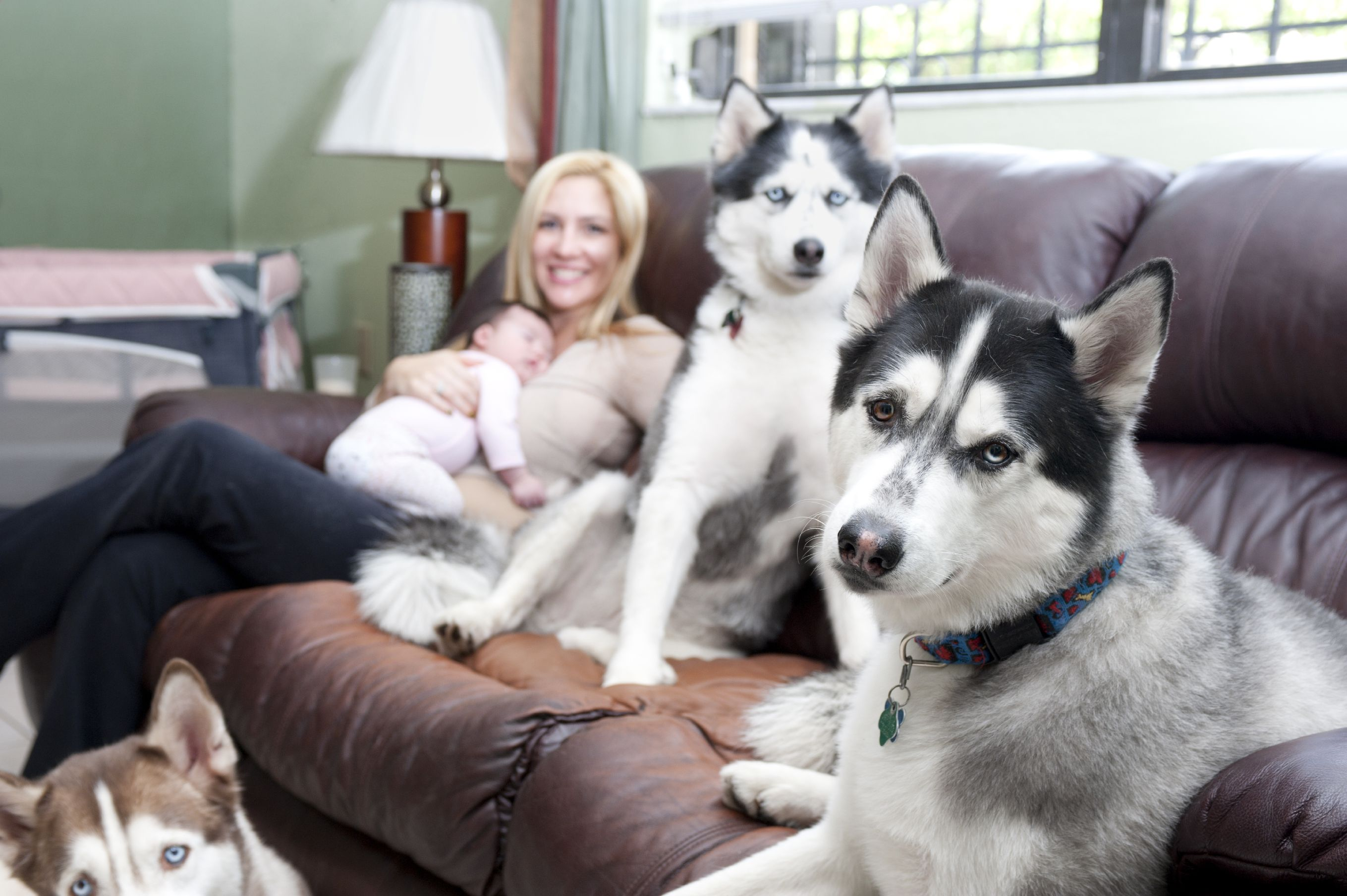 2016 resolutions for the pet owner and pet pet owners