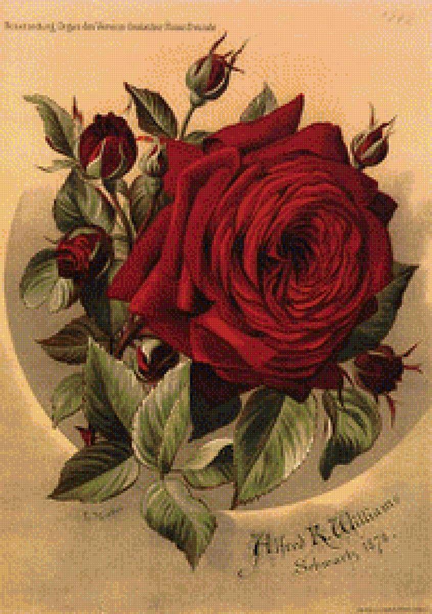 Днем рождения, ретро картинки розы