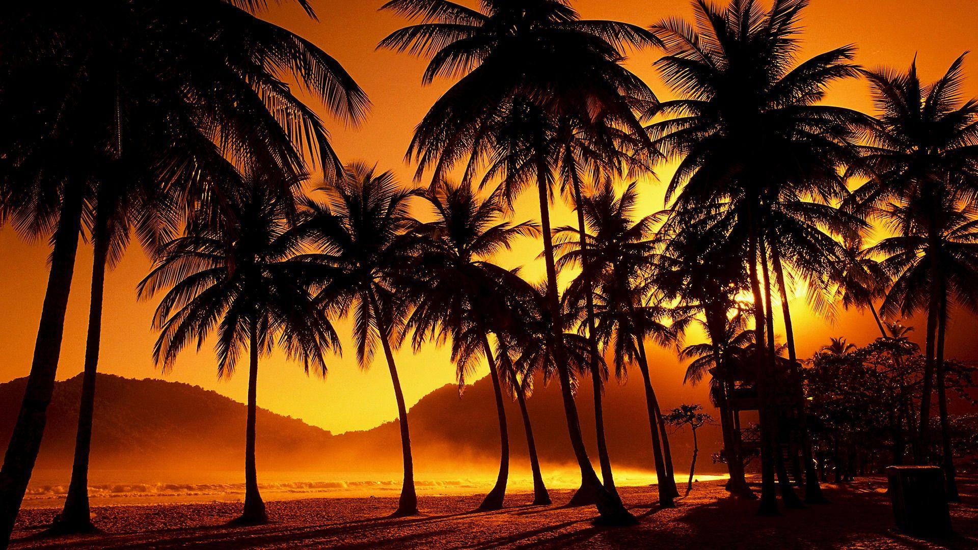 Resultat De Recherche D Images Pour Fond D Ecran 4k Pour Pc Images Palmier Coucher De Soleil Beau Coucher De Soleil