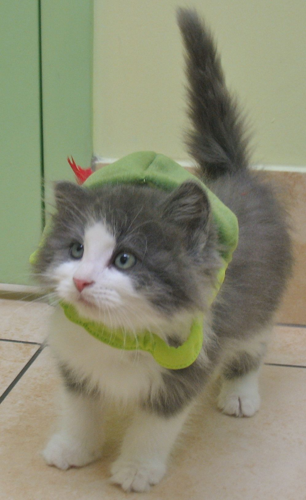 i don't know what i have on my head. Kitten adoption