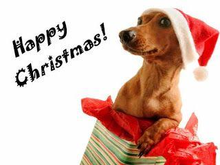 Christmas Dogs Cute Dresses 2013 Latest Uk Usa Uae Australia