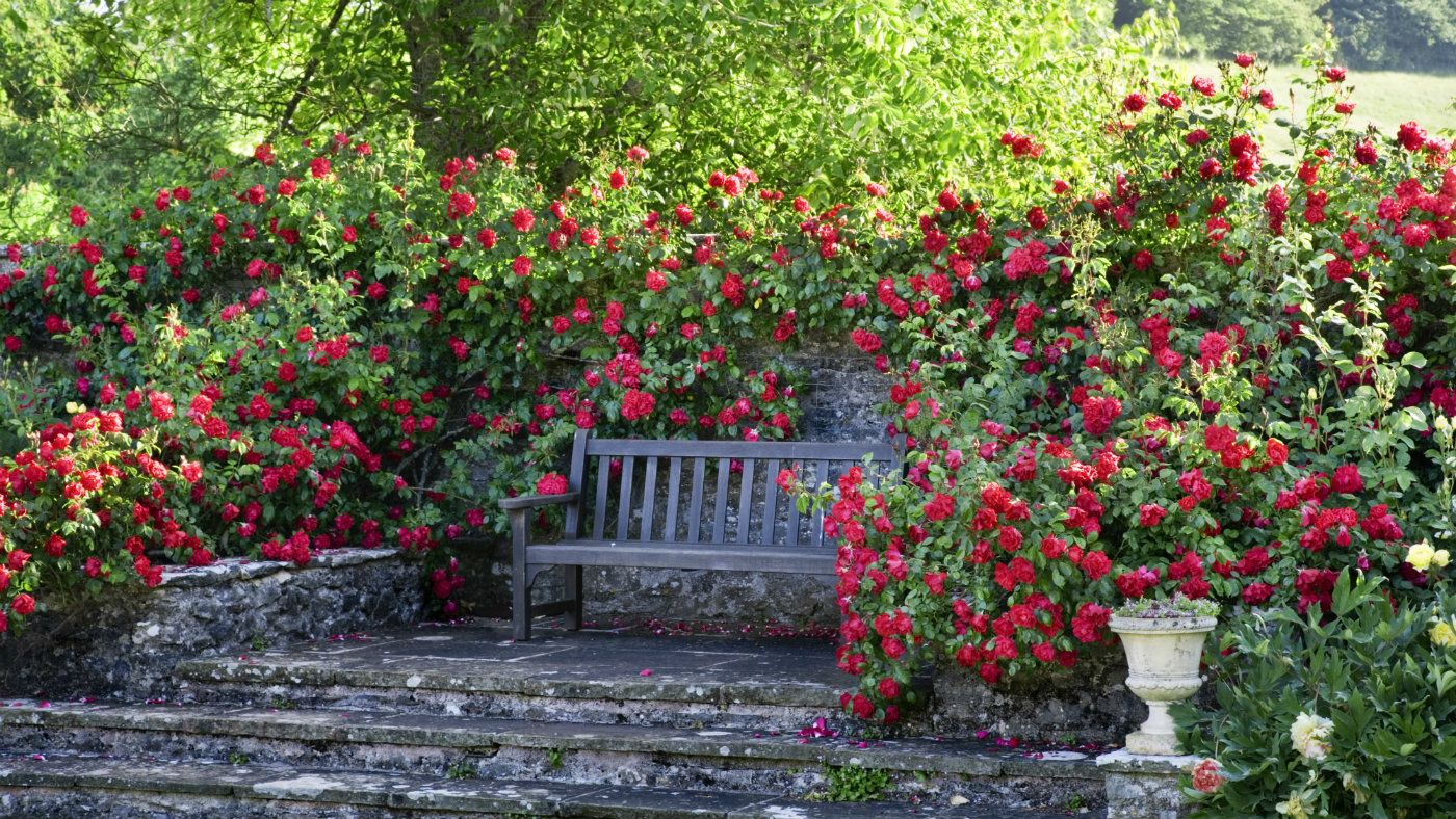 Imagine yourself sat at this quiet bench surrounded by the sights the garden at national trust compton castle in devon boasts a rose garden medieval style knot garden orchards and more solutioingenieria Image collections