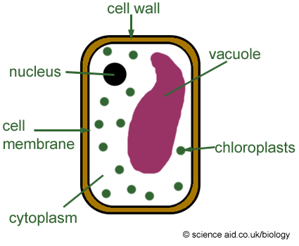 Idea For Green Schools Sub Brand Plant Cell Plant Cell