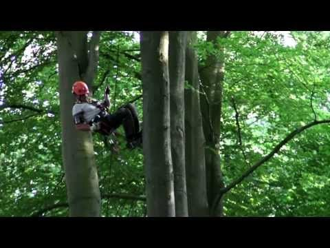 Tree Climbing up-and-down / Tree climb - YouTube
