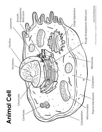 Animal Cell Worksheet Answers Inspirational Worksheet Cell Organelles Worksheet Answers Grass Fedj Plant Cells Worksheet Cells Worksheet Animal Cells Worksheet