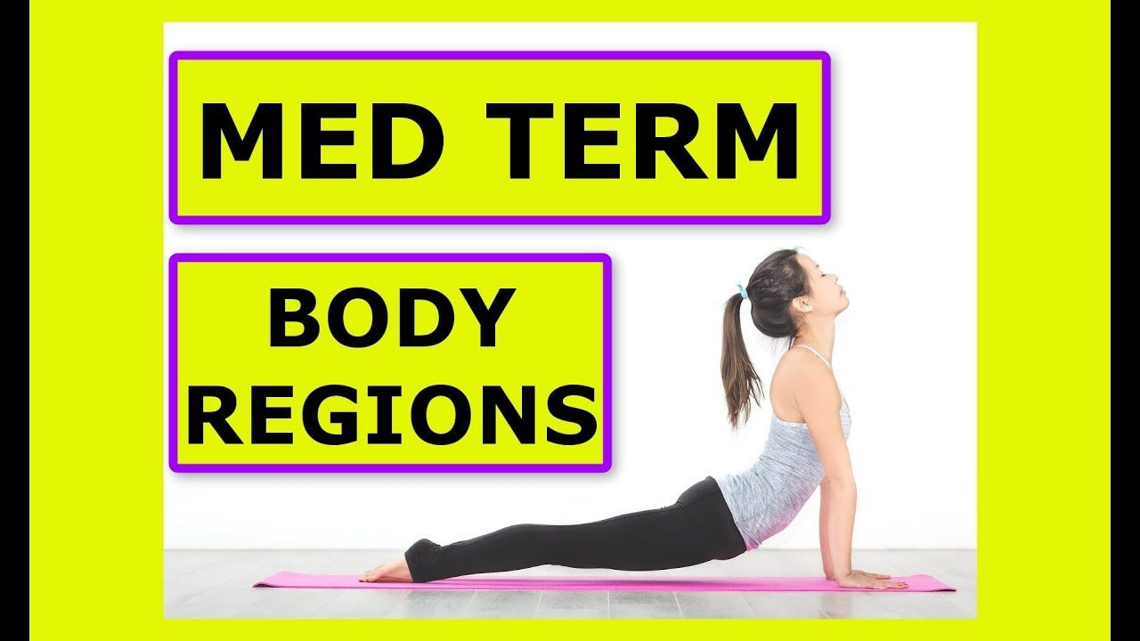 Crash Course in Medical Terminology: Body Region Based Muscle Terms ...