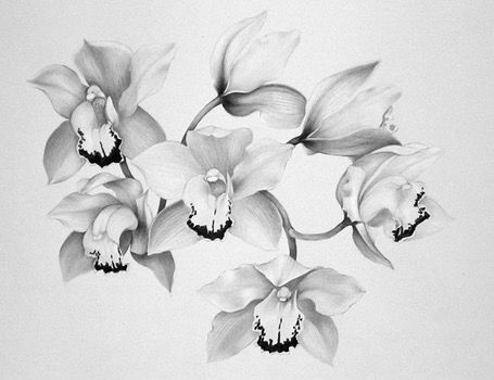Cymbidium Orchids Orchid Flower Tattoos Flower Drawing Orchid Drawing