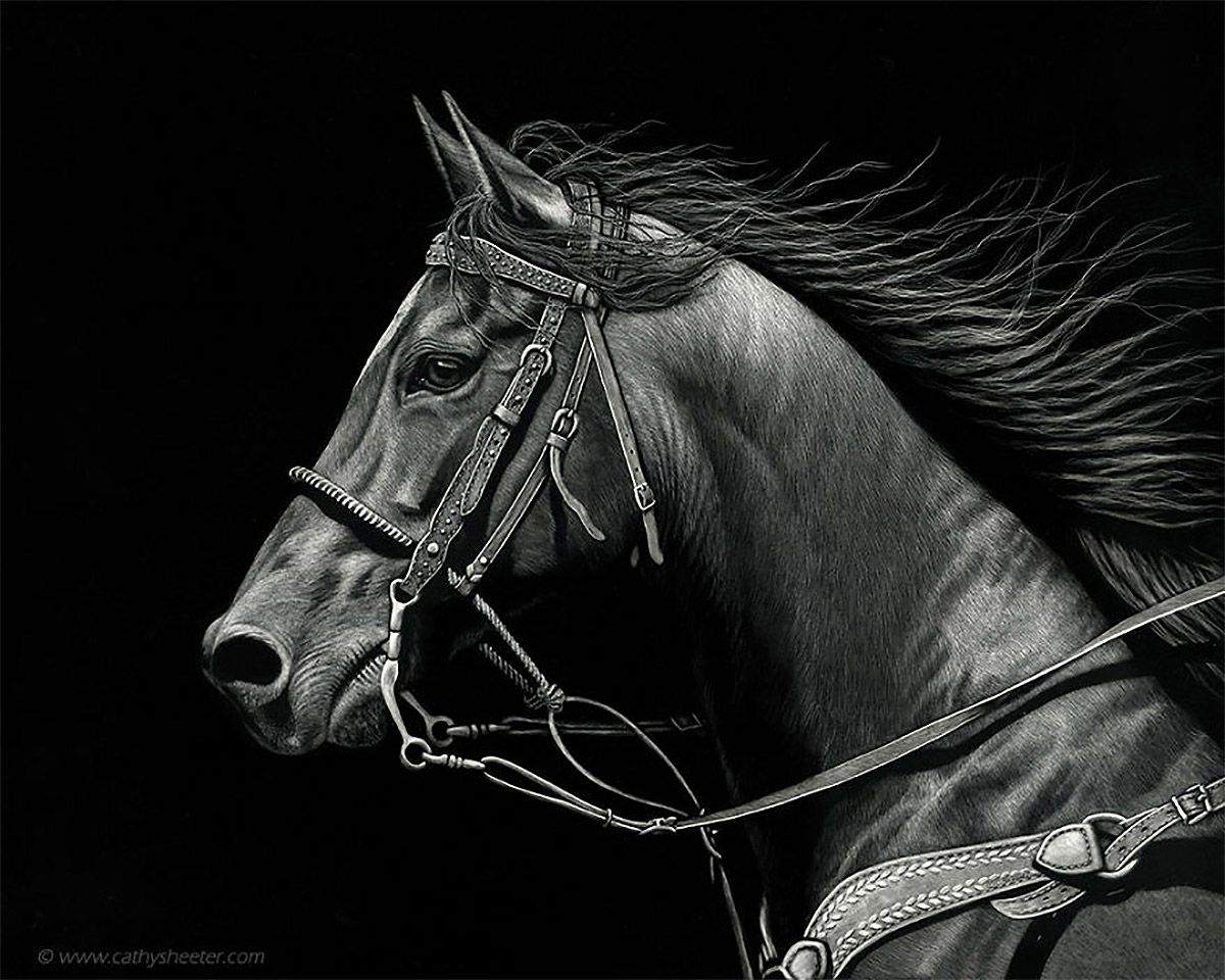 Hyper Realistic Scratchboard Illustrations By Cathy