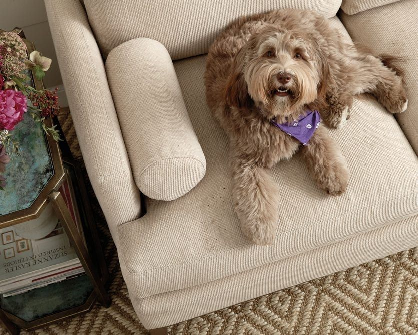 Best Sofas For Dogs In 2020 With Images Pet Friendly Furniture