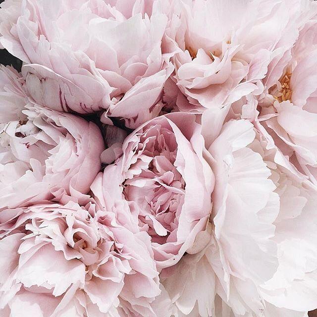 Pin Von Manja Christin Clayton Auf Blumen Schone Blumen Blumen Blumen Bluten