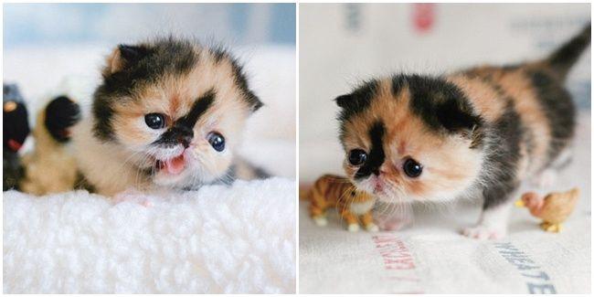 Cuties Baby Binatang Lucu Kucing Belang Kucing Belang Tiga