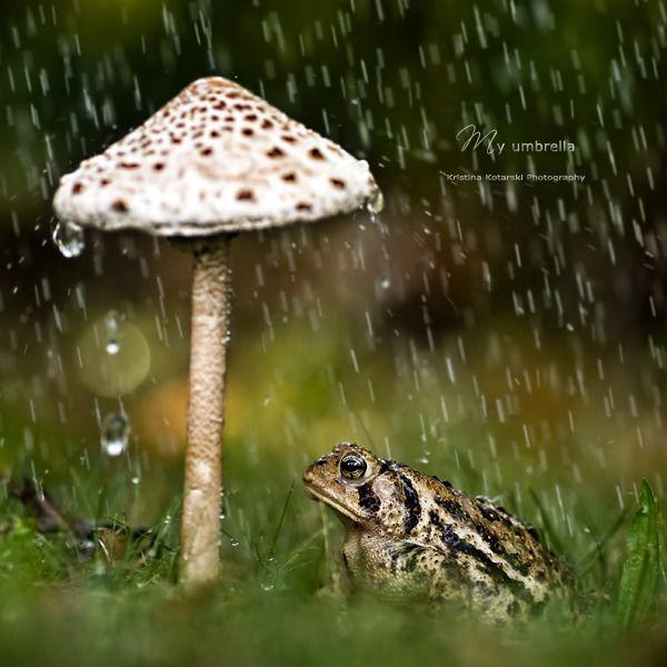 """My Umbrella"" by Kristina Kotarski"