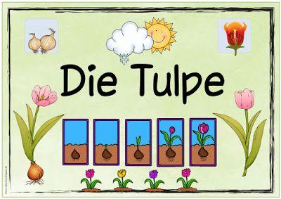 Ideenreise Themenplakat Die Tulpe Schule