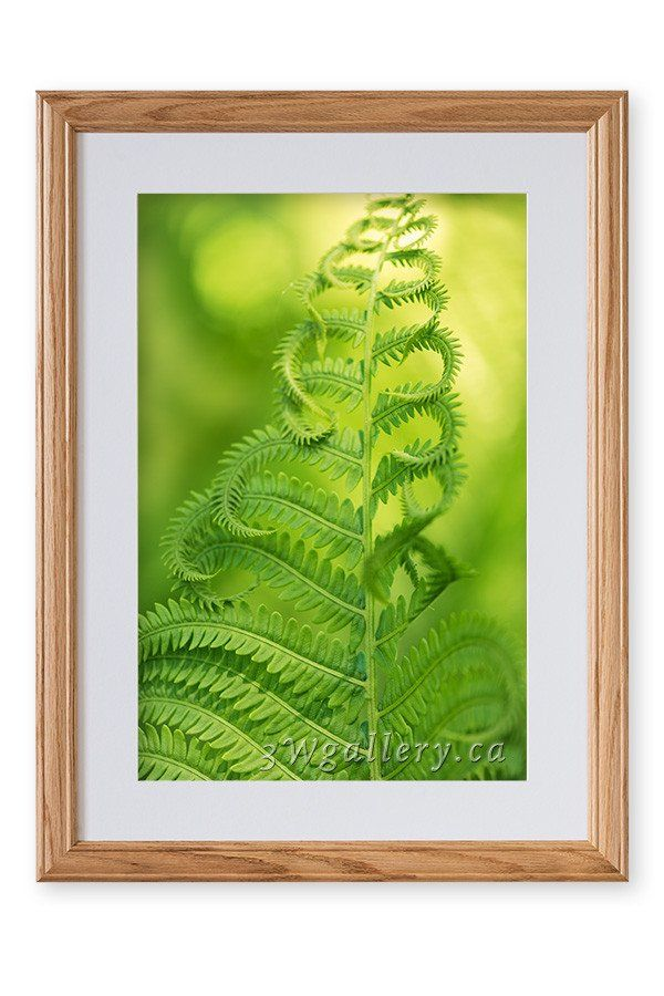 Spring Fern Framed Photo Print | Framing materials, Fern and Solid wood