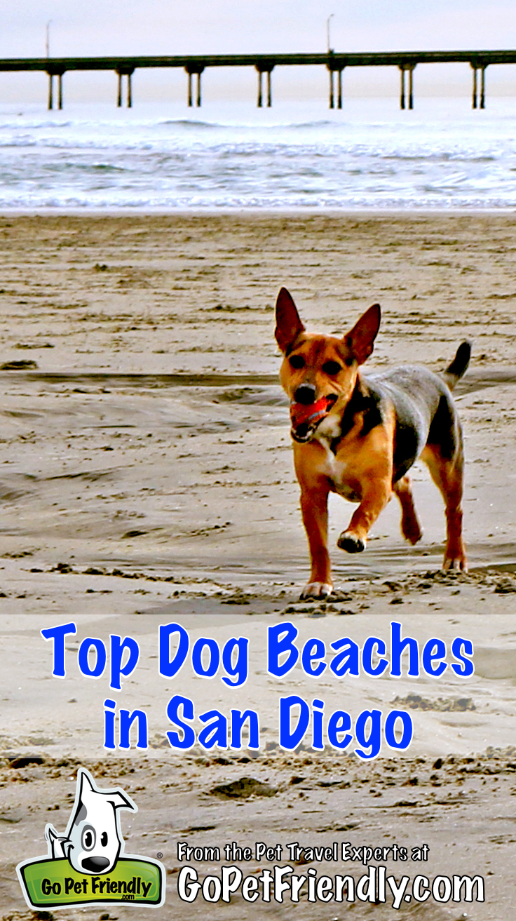 Top Dog Beaches In San Go Gopetfriendly Dogbeaches Dogfriendly Road Trip