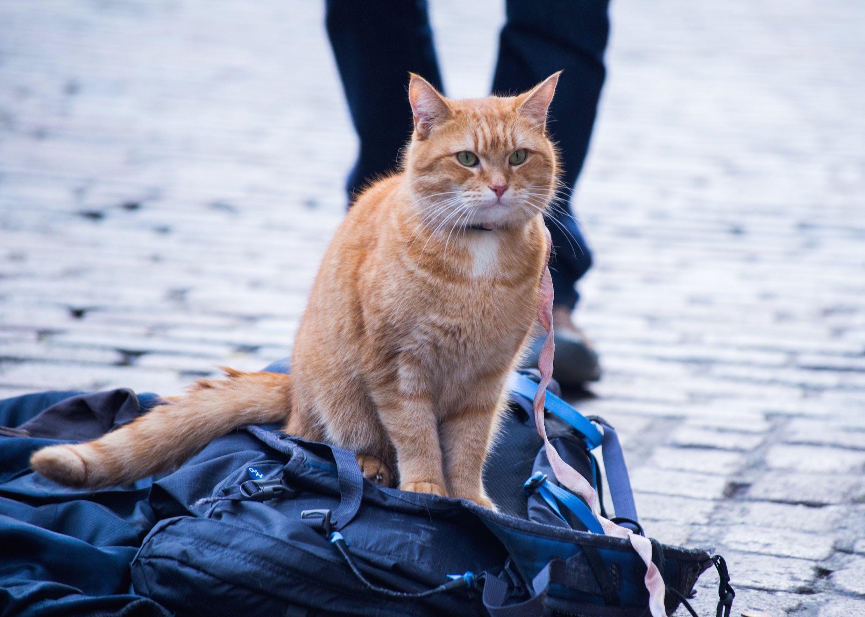 A Street Cat Named Bob Official Trailer At Cinemas