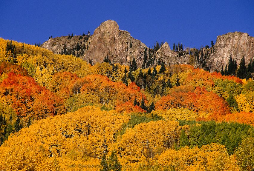 Colorado fall foliage for 2014 the weather channel estimates colorado fall foliage for 2014 the weather channel estimates peak colors will occur between sciox Choice Image