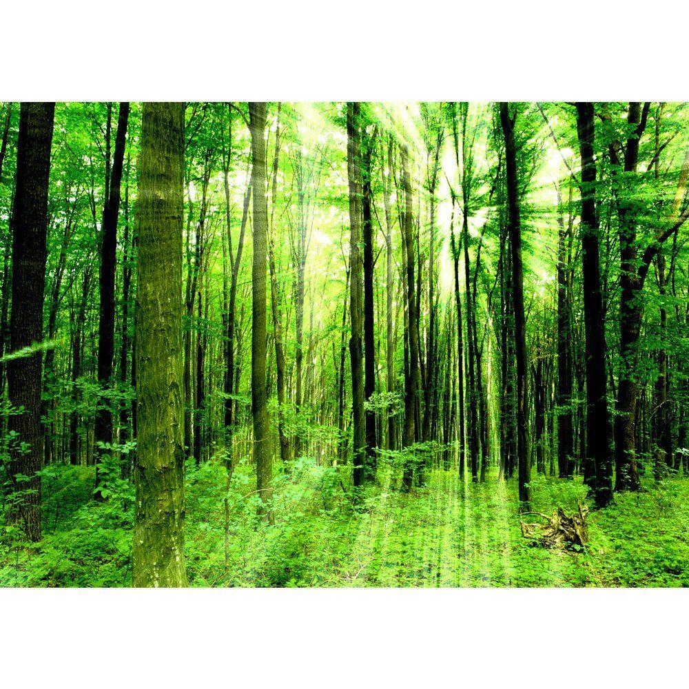 Fototapete fenster wald  Vlies Fototapete PREMIUM 400x280cm SUNLIGHT FOREST by liwwing (R ...