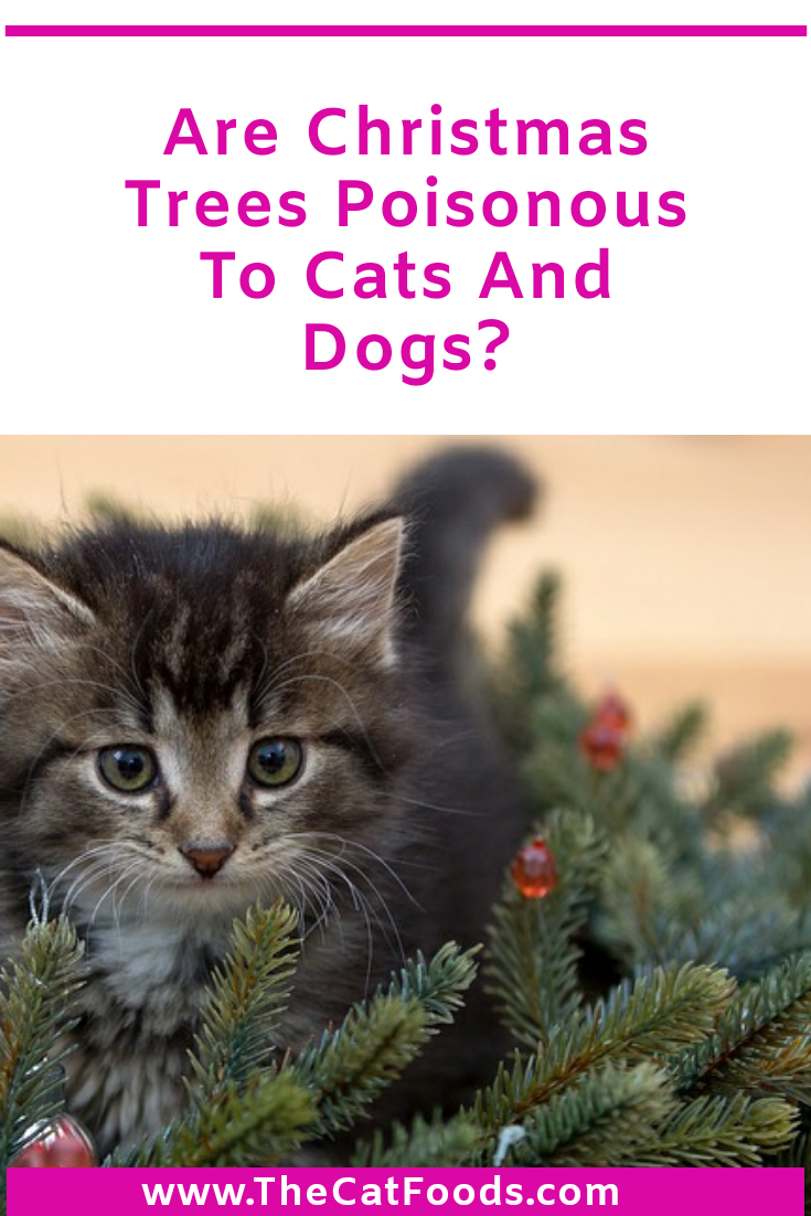 Are Christmas Trees Poisonous To Cats And Dogs in 2020