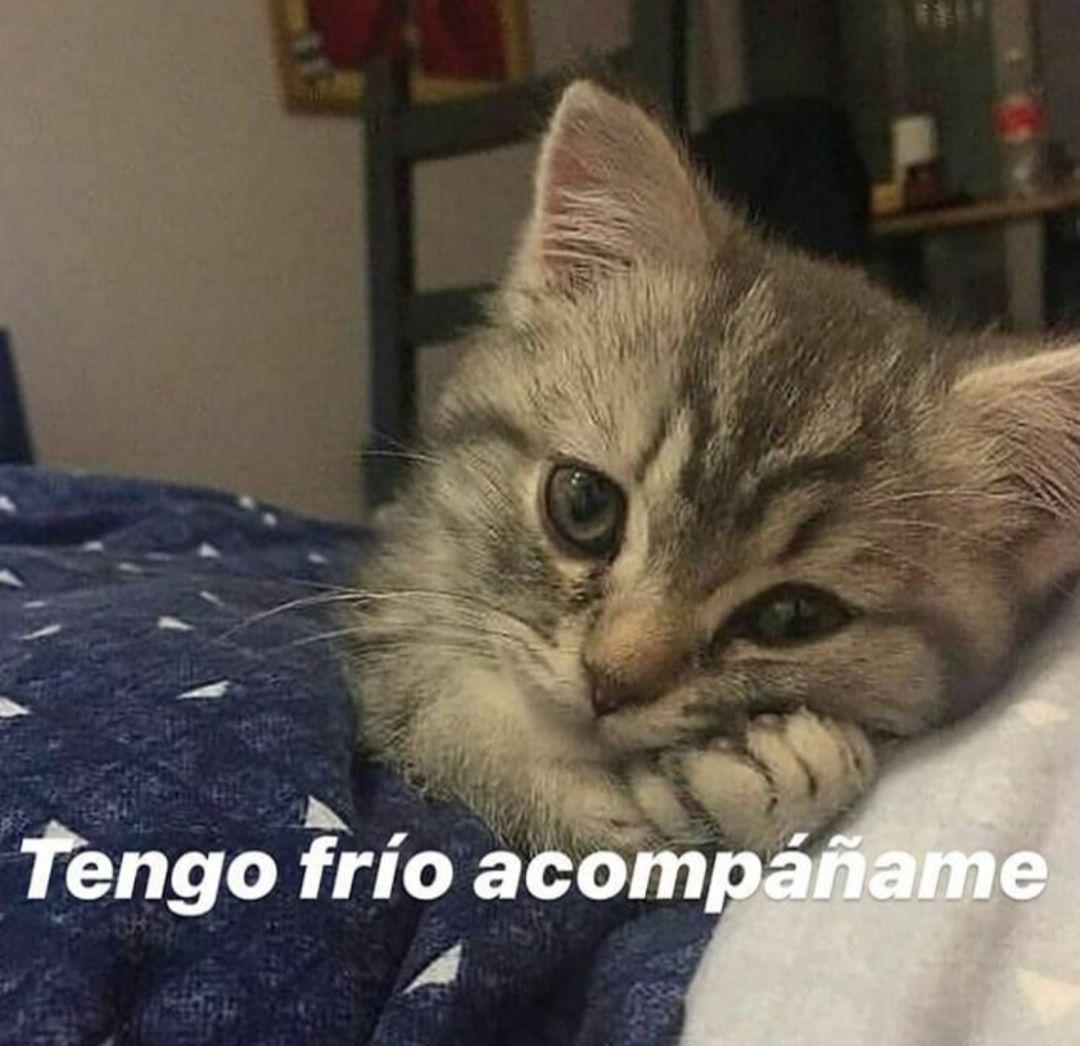 Memes Soft Memes Lindos Memes Espanol Graciosos Memes Divertidos