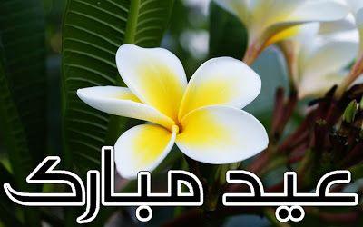 Eid Ul Adha Zuha Mubarak 2012 Flowers Greeting Cards In Urdu 006 Plumeria Frangipani Macro Photography