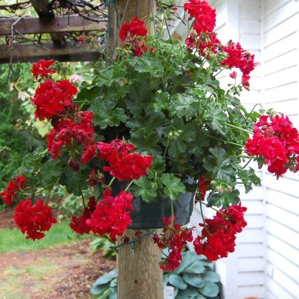 Geranium Vertical Garden Diy Planters Outdoor Lightweight Planter