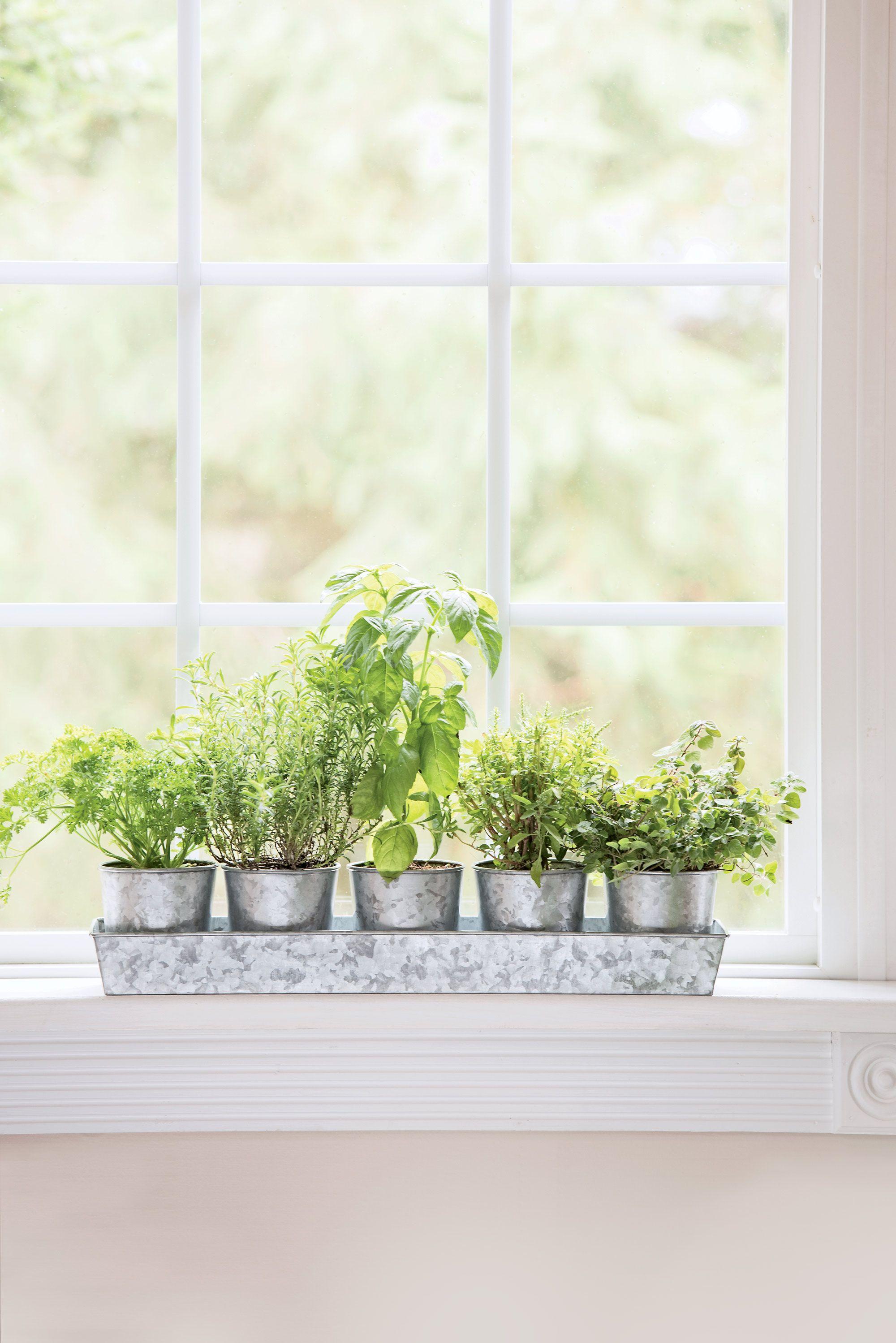 Galvanized Windowsill Herb Planters Tray Gardeners Com In 2020 Herb Planters Herb Garden In Kitchen Herbs Indoors