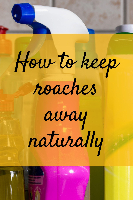 DIY Roach Control Diy pest control, Natural roach