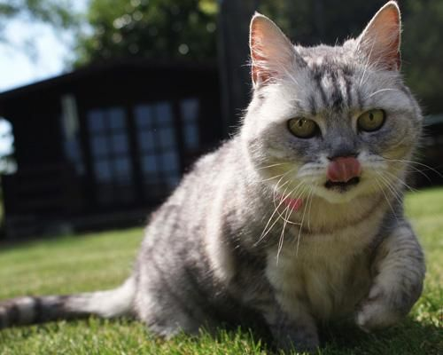 15 Pets With Guinness World Records With Images Cats And Kittens Pets Domestic Cat