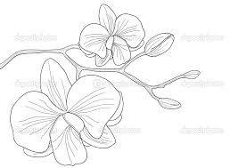 bildergebnis f r orchideen zeichnen orchde und co. Black Bedroom Furniture Sets. Home Design Ideas