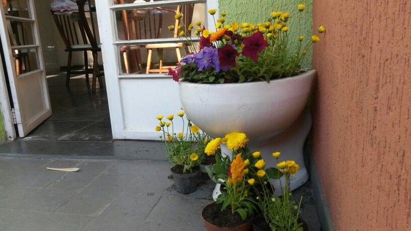 O dia em que o sanitário de alguém, virou a floreira do outro! ♥ #calendulas #margaridas #petunias