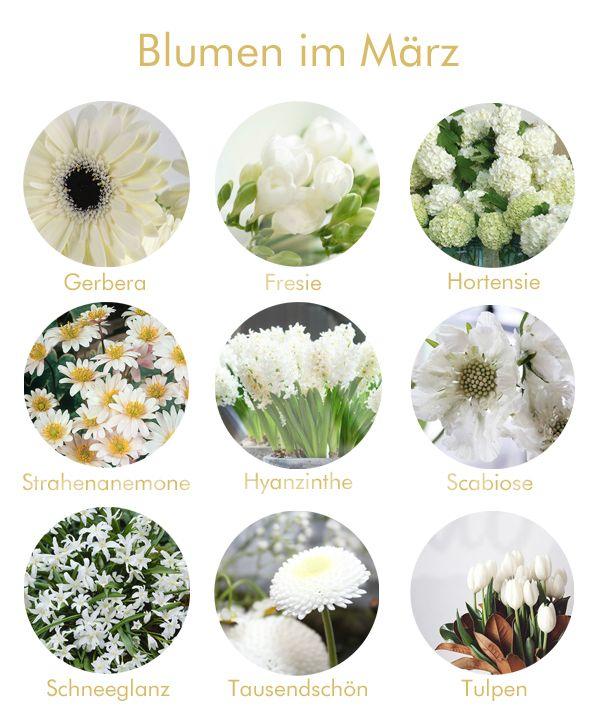 Blumen im Mrz  Hochzeit deko  Pinterest  Blumen Brautstrue und Hochzeitsdetails