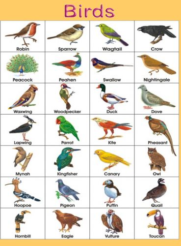 birds name chart | Pre-K Printables | Birds pictures with names