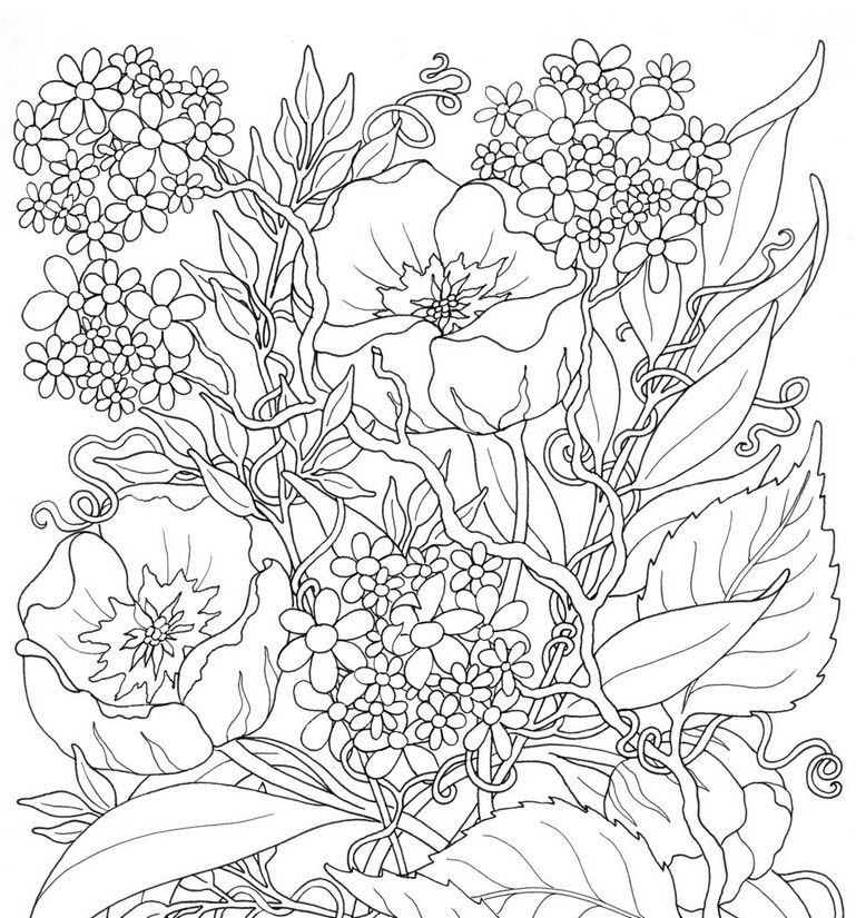 Blumen Kids Pinterest Coloring Pages Adult Coloring Pages Und