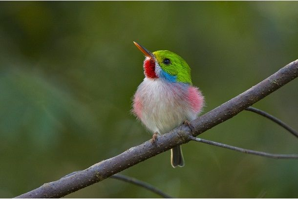 鳥たちの楽園へようこそ Roomie ルーミー ペットの鳥 美しい鳥 珍しい鳥